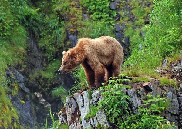 Ile de Kodiak et les îles aléoutiennes