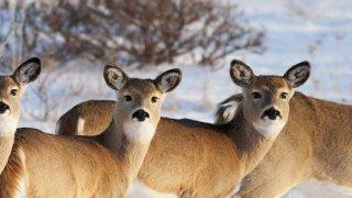 Apprentis musher (pour petits et grands)