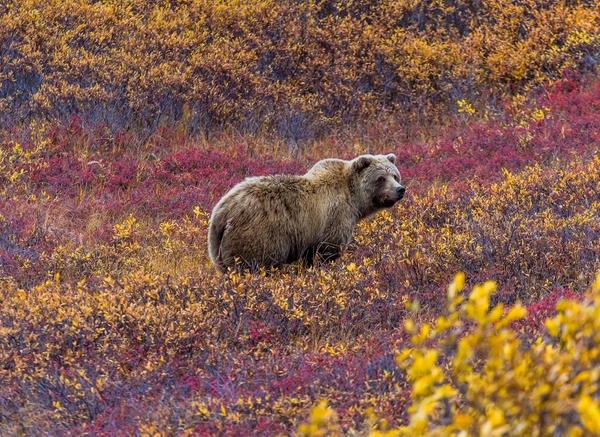 Le Parc National Denali & alentours