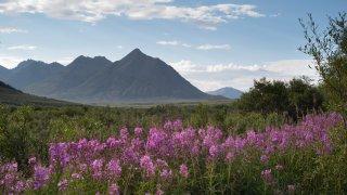 Top 5 des plus beaux parcs canadiens